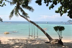Mae Haad Beach Palme